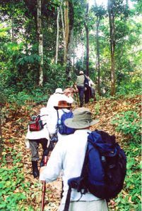 Walking into the Amazon Rainforest on cruise of the Motor Yacht Tucano