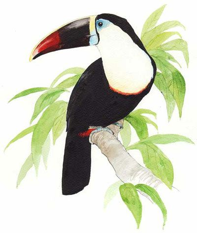 White Throated Toucan Drawing on Motor Yacht Tucano