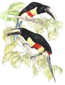 Many Banded Aracaris Drawing on Motor Yacht Tucano