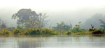 Misty Amazon rainforest in the early morning on a cruise of the Motor Yacht Tucano.