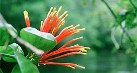 red and yellow amazon flower