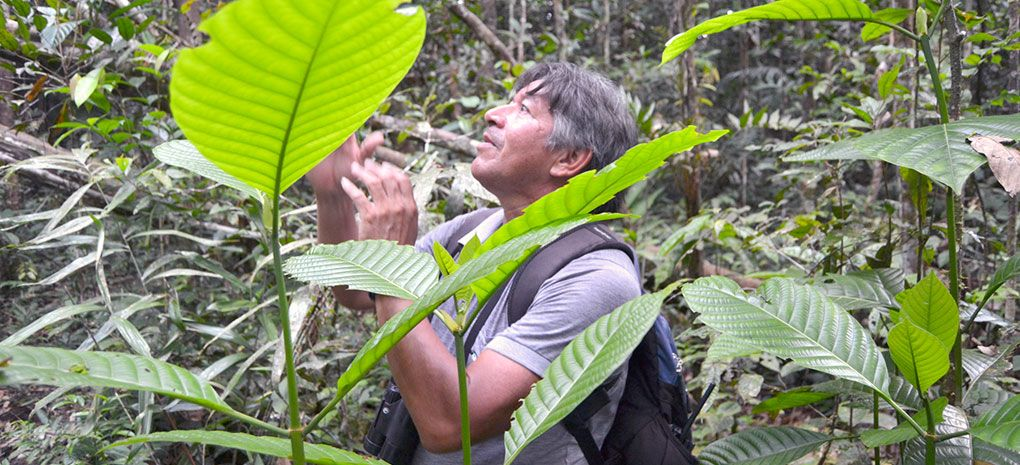 Tucano Amazon Rainforest Tour Guide