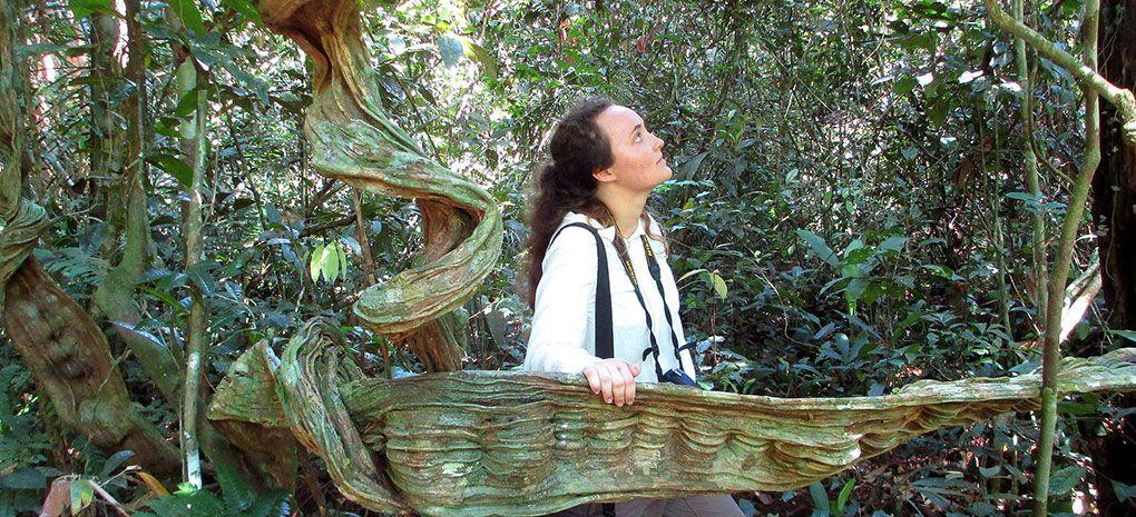 Strangler Fig on Amazon Nature Walk