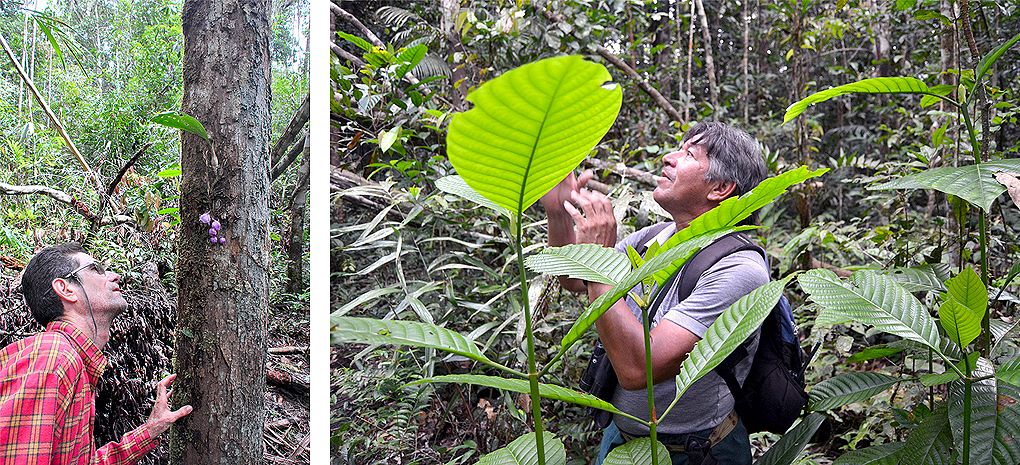 Amazon Rainforest Tour Guide MY Tucano Amazon River Cruise and Rainforest Expedition Tour