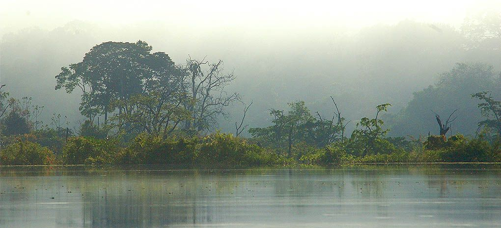 The Amazon Rainforest in a Mist seen from the MY Tucano