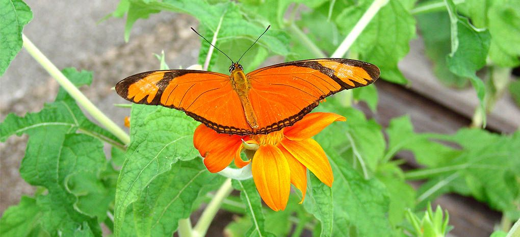 Borboleta, Amazon River Cruise and Rainforest Expedition