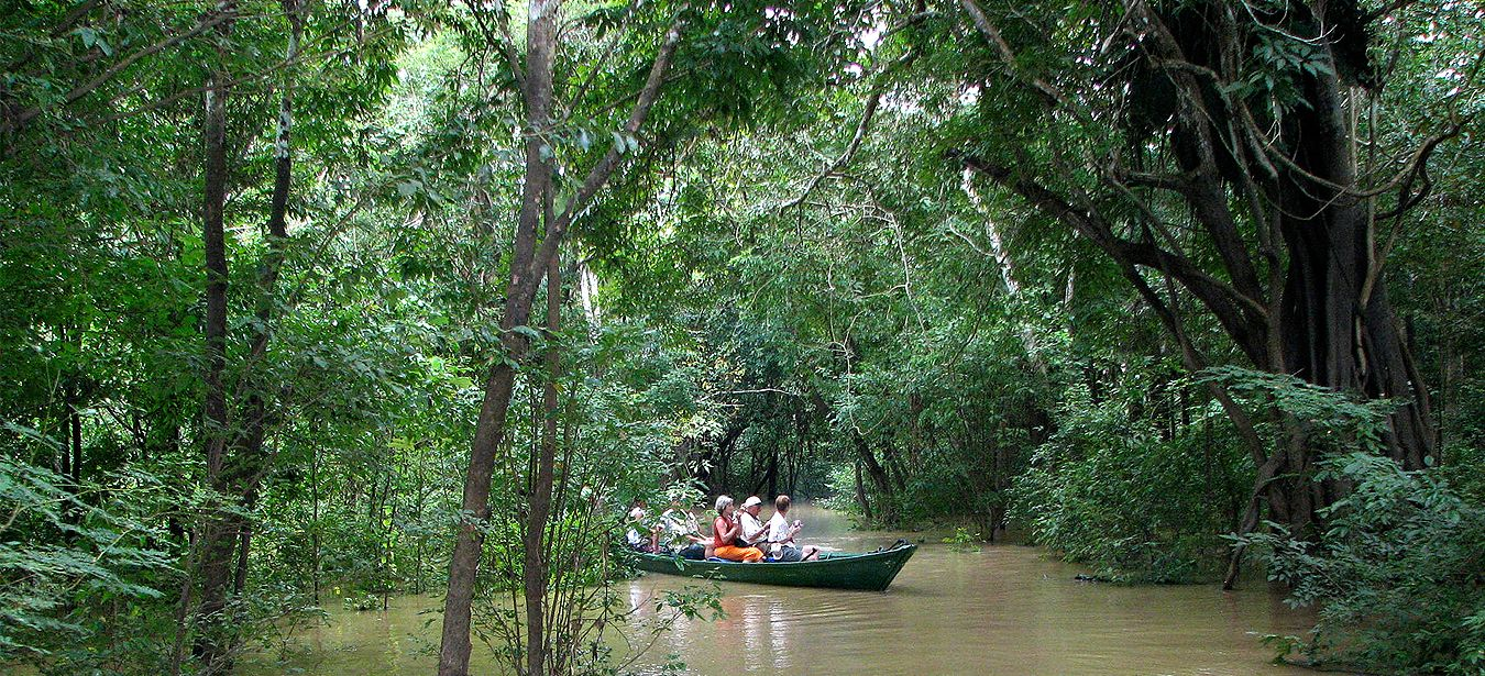 Amazon Cruise Launch Boat Excursion through the Rainforest